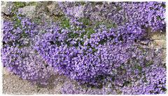 Le printemps sur le mur