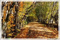 Sentier de feuilles