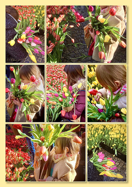 Tulips in Amsterdam... 2