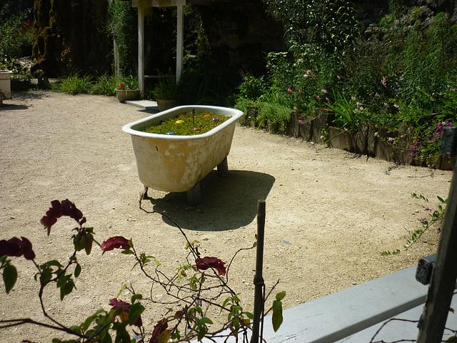 Autre curiosité du jardin ...
