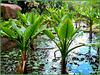 MAHE' : un parco naturale spontaneo, nessun giardiniere incontrato - irrigazione sempre spontanea dal cielo !