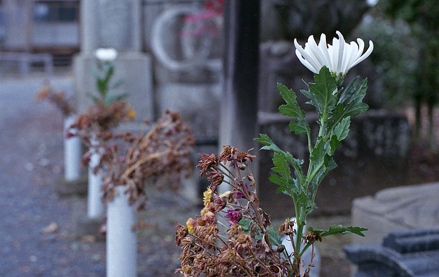 Flowers at a temple