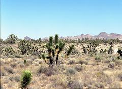 Land of Joshua