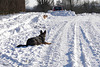 Max en Angelo in de sneeuw