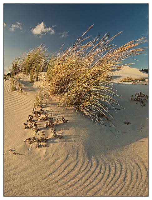 Wind on the dunes