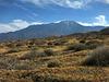 Mt. San Jacinto (0429)