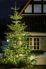 Christmas tree (08.12.2018)