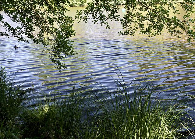 Am Moorsee