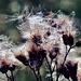 Kratzige Schönheiten - Scratchy beauties
