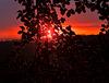 Beech tree sunset