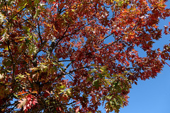 Une belle journée d'automne !