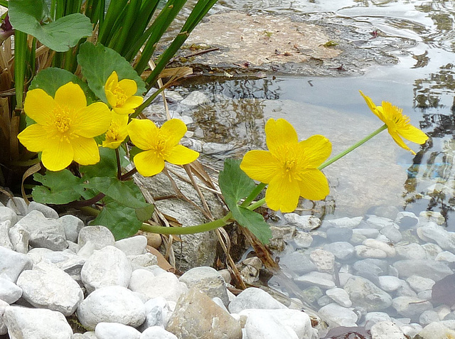 Frühling am Teich