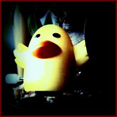 """""""Bonsoir, I am Madeline, the film noir duck."""""""