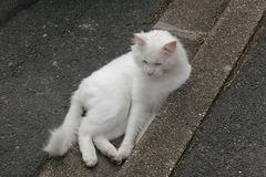 Après le chat de gouttière, voici le chat de caniveau