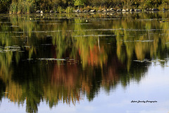 Le reflet en automne