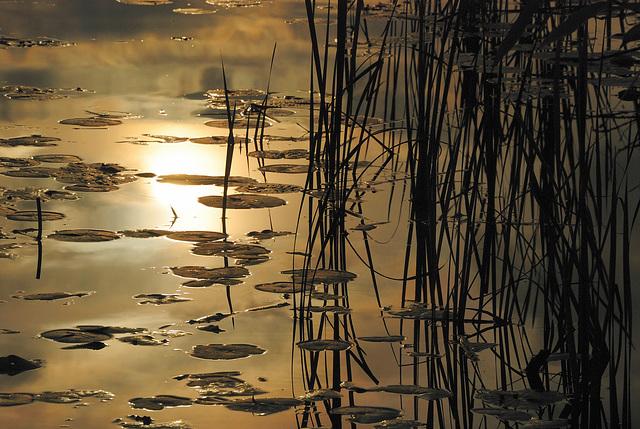Close to sunset @ Deer Lake