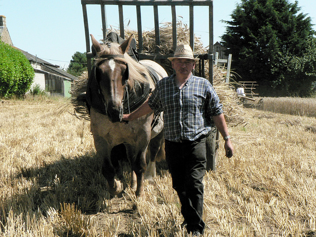 Une vie de cheval