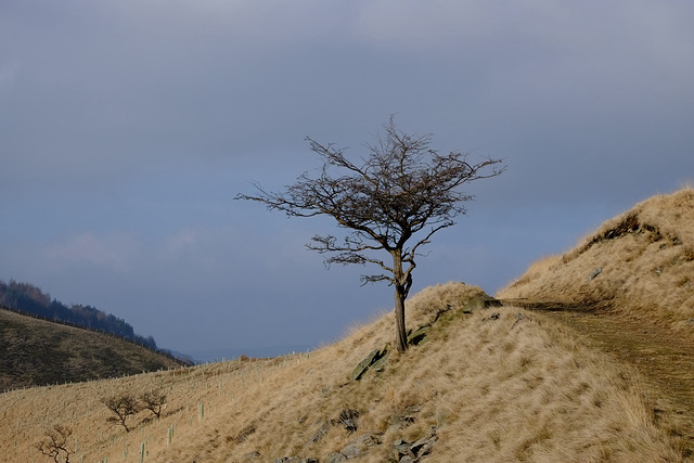 Shire Hill and the tree
