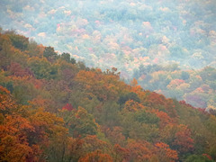 Colors of FALL - Blue Ridge Parkway