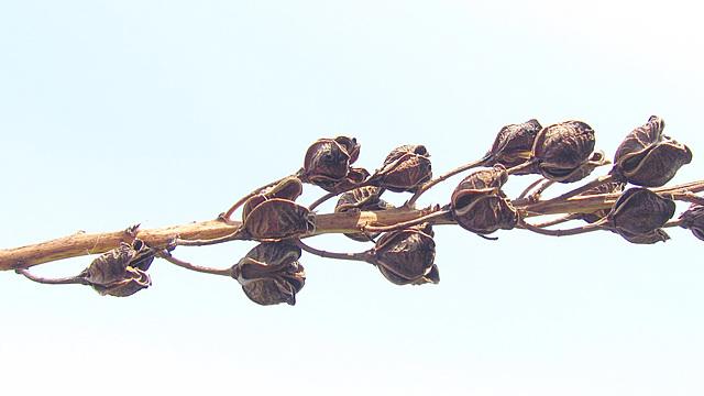 flores secas 0039