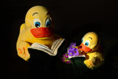 book-ducks are looking for spring
