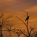 Crow on Sentry duty