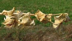 flores secas 0040