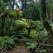 Monga forest