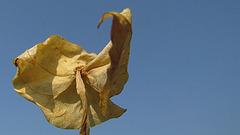 flores secas 0041