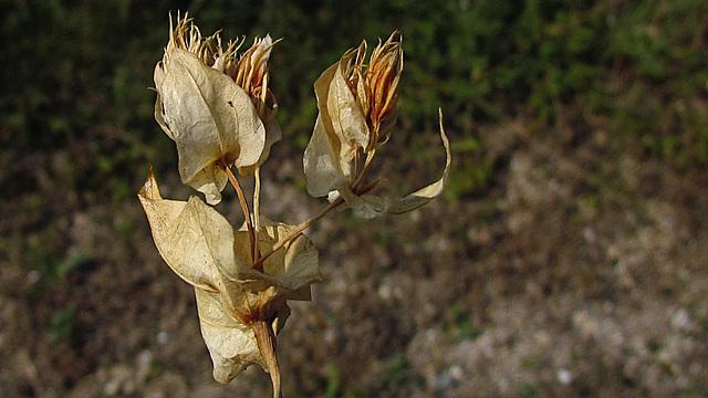 flores secas 0042