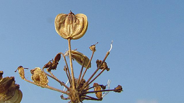 flores secas 0043