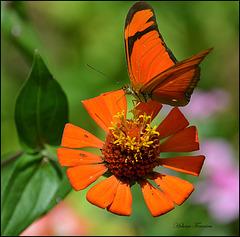 Orange colors  ઇઉ.¸¸.