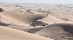 Algodones Dunes / just chillin / Thanksgiving 2020 (# 0598)