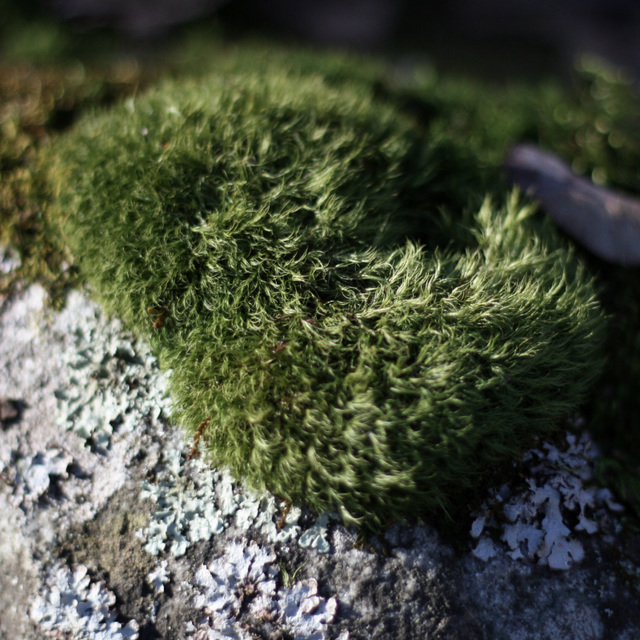 Bless this moss