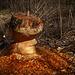 Biber-Kunstwerk ... Art of Beaver (PiP)