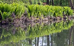 Vorspiegelung am Ufer