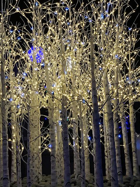 Denver Botanical Garden Christmas Lights