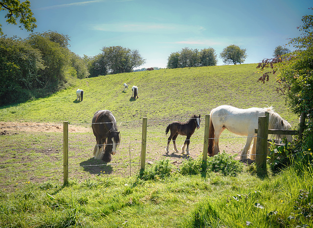 A 'Happy fence Friday' and 'Good wishes' to all.. from Dj.. the 'Pip's show the youngsters in large crop.