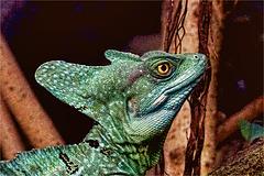 Basilisk Portrait