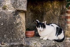 gato de guardia en la garita