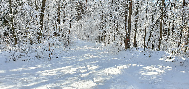 Winter Wanderung