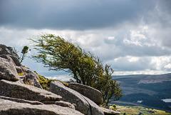 Dartmoor - 20150831