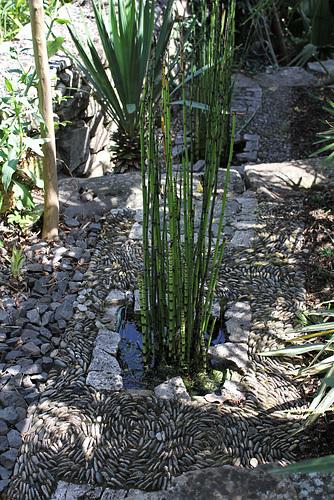 Equisetum (1)