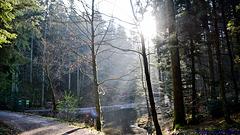 Ein schöner sonniger Tag im Wald