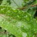 A wet leaf