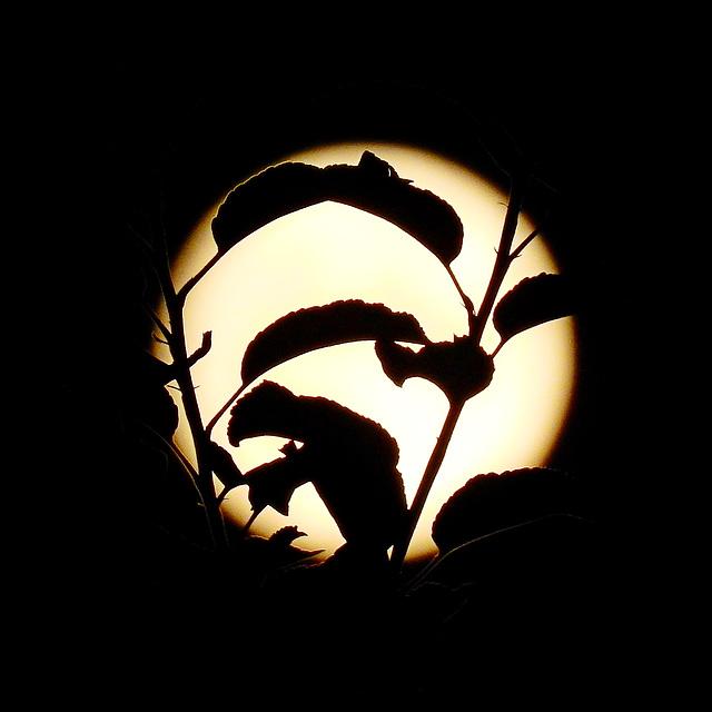 the moon….