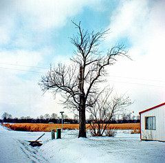 Tree At The Edge Of Town