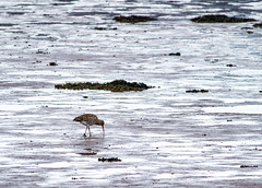Two Years Ago Today, Curlew