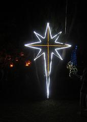 Christmas Lights Tmba Lions 2019 5939
