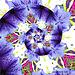 Fractal art with Petunias ;-)